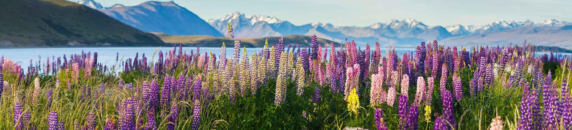 Un circuit en Nouvelle-Zélande : votre occasion de faire un voyage inoubliable de l'île Nord à l'île Sud  !