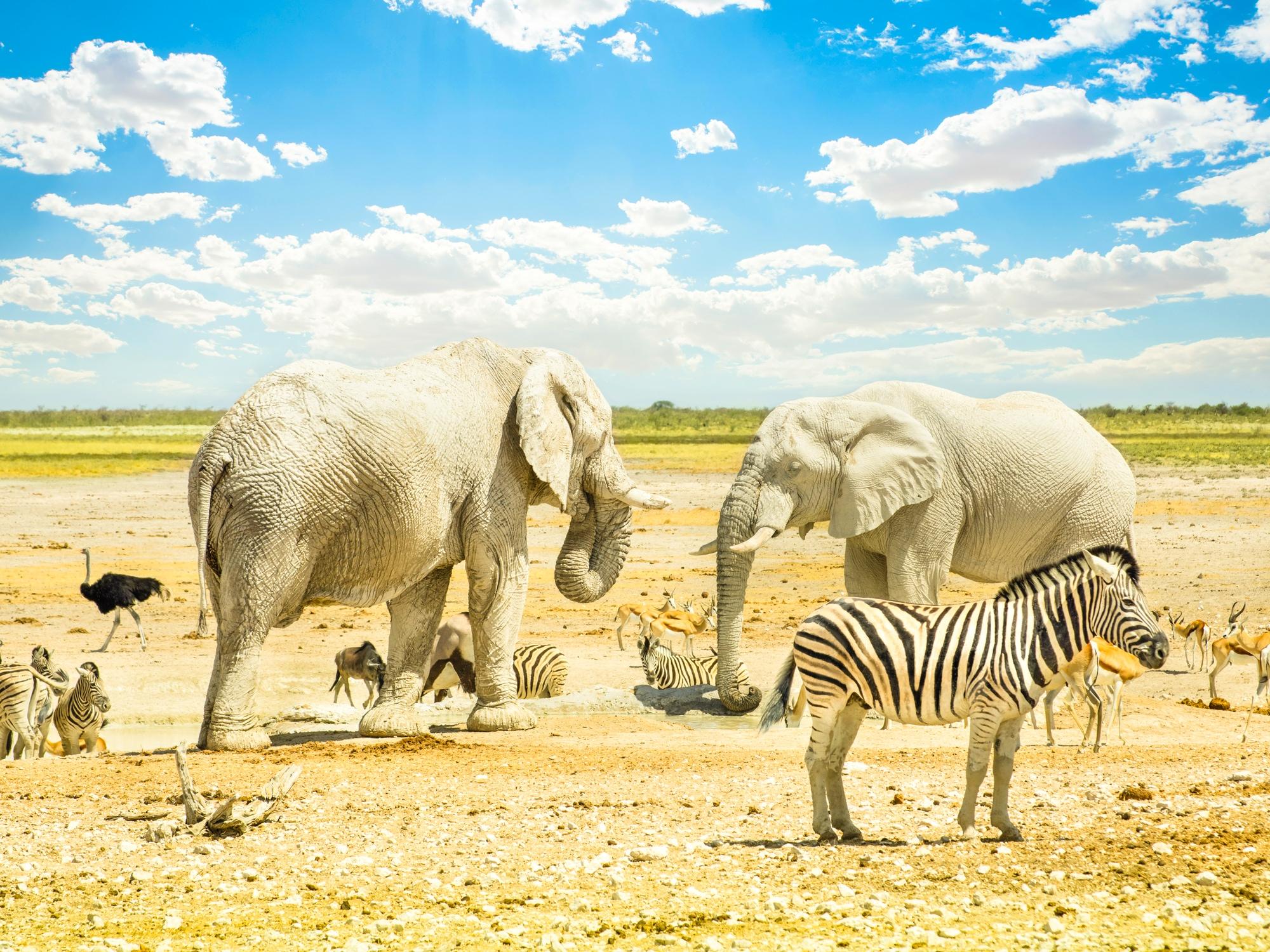 Dessine-moi la Namibie