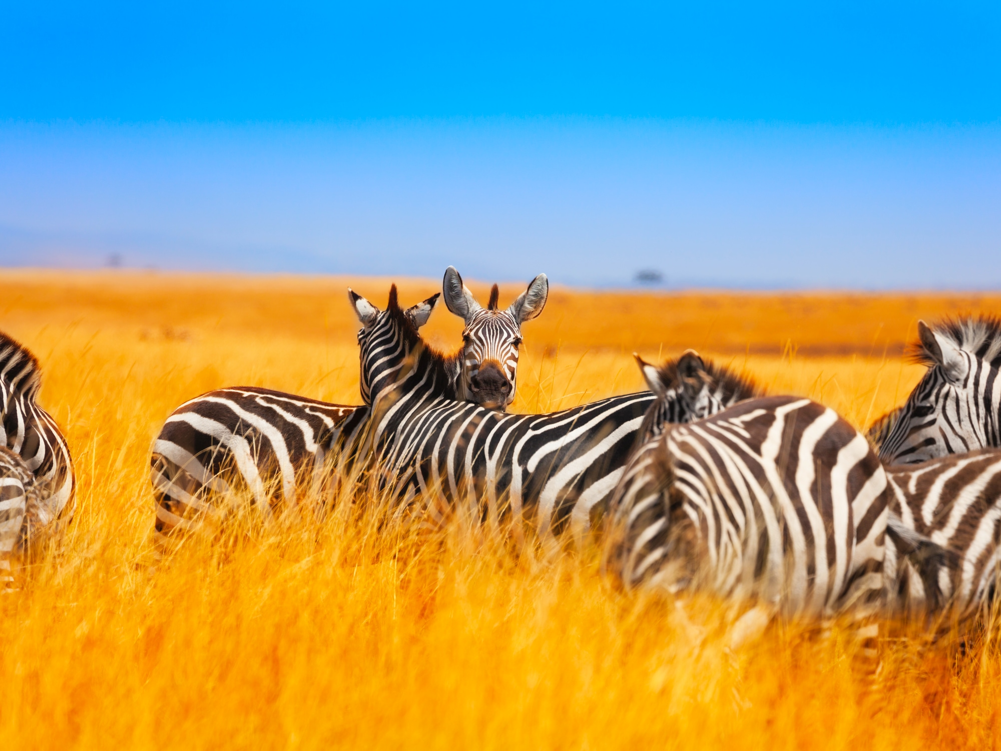 Immersion en terre Kenyane