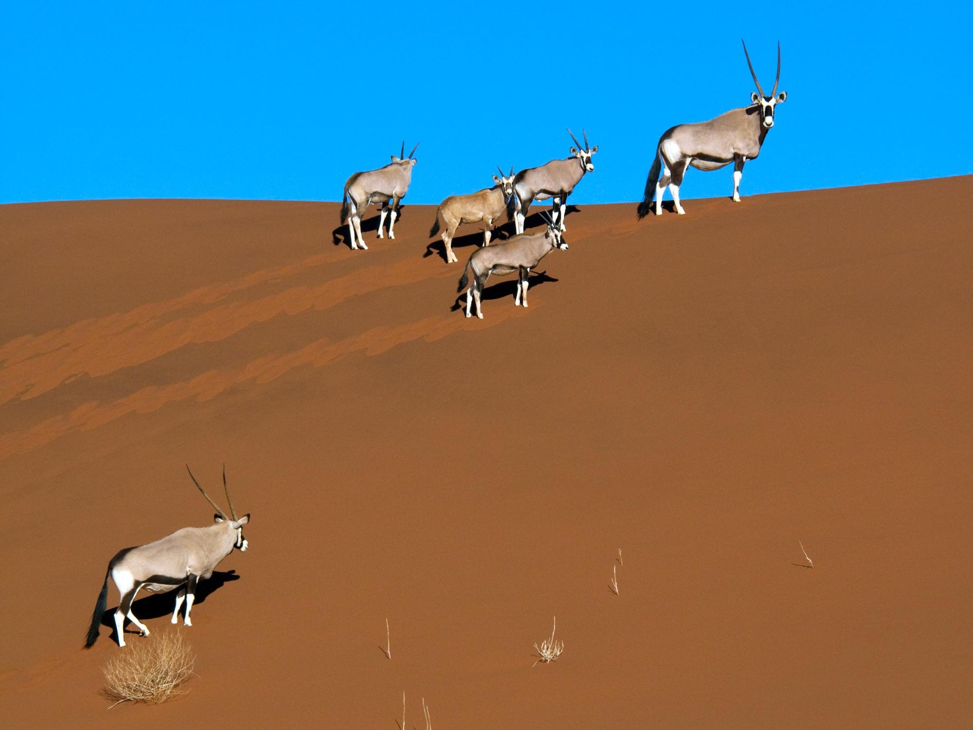 La Namibie à l'infini, faune & paysages