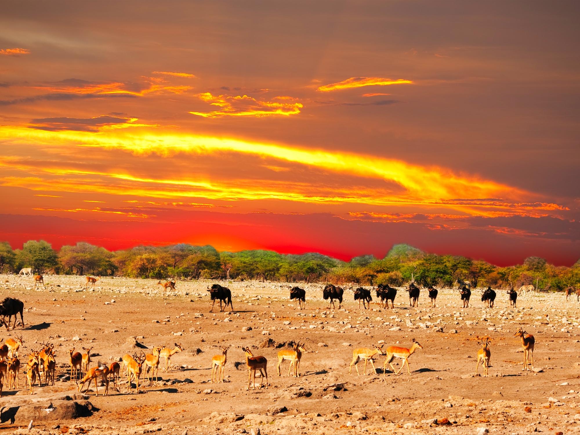 Roadtrip en Namibie, pays des grands espaces