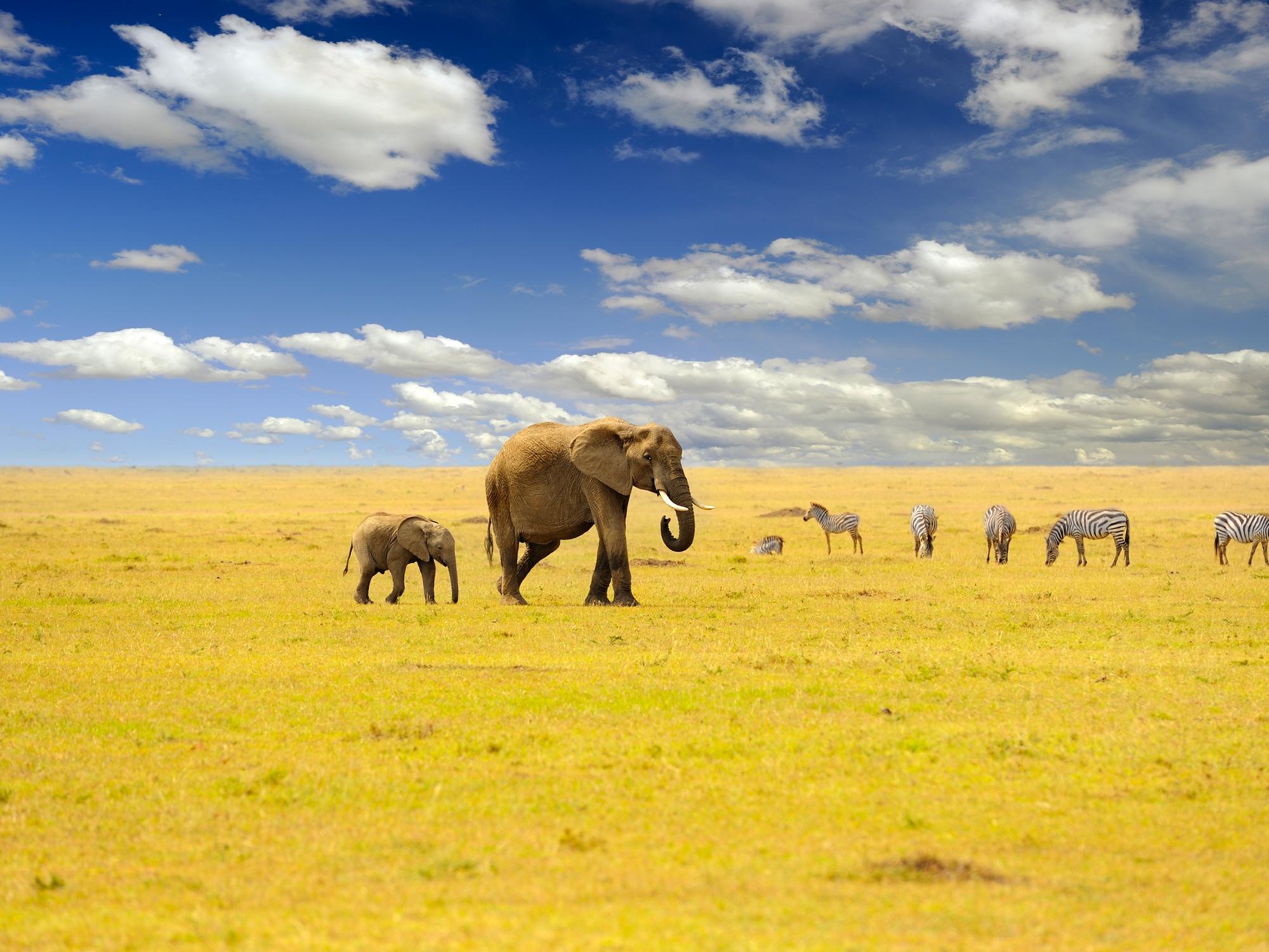 Safari d'exception au Kenya