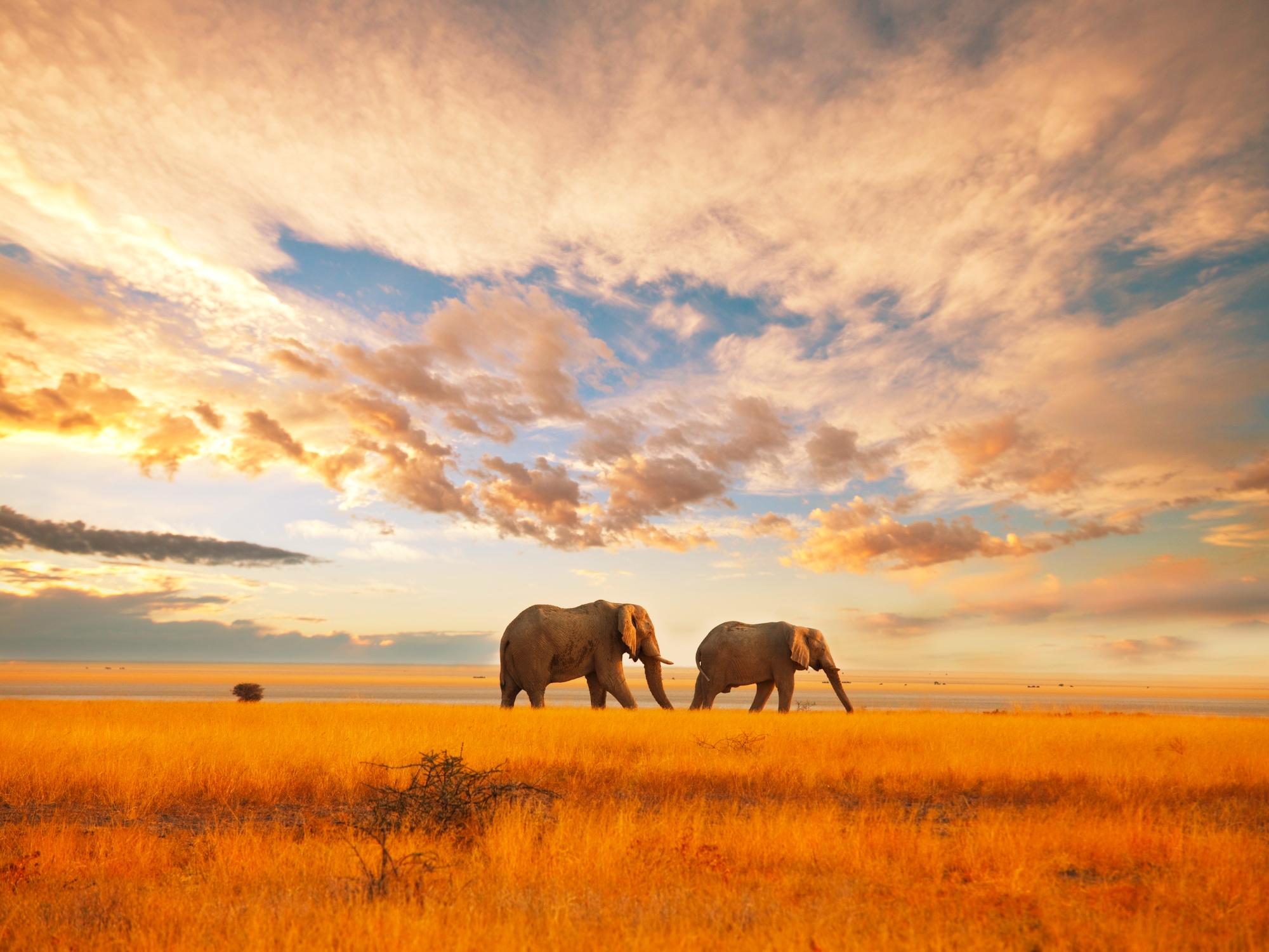 Voyage au Kenya, terre des Masais et des Big 5