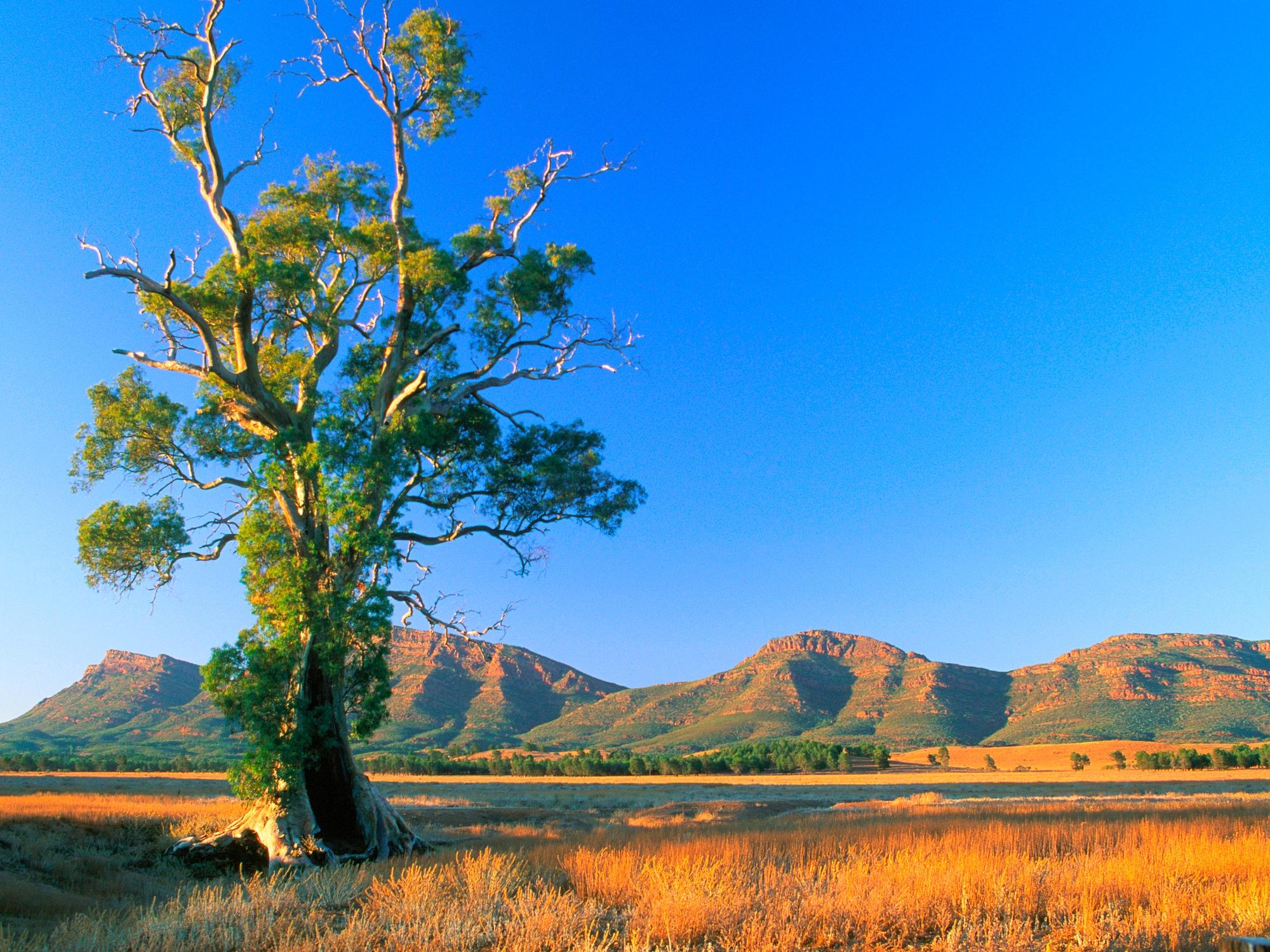 Une aventure australienne