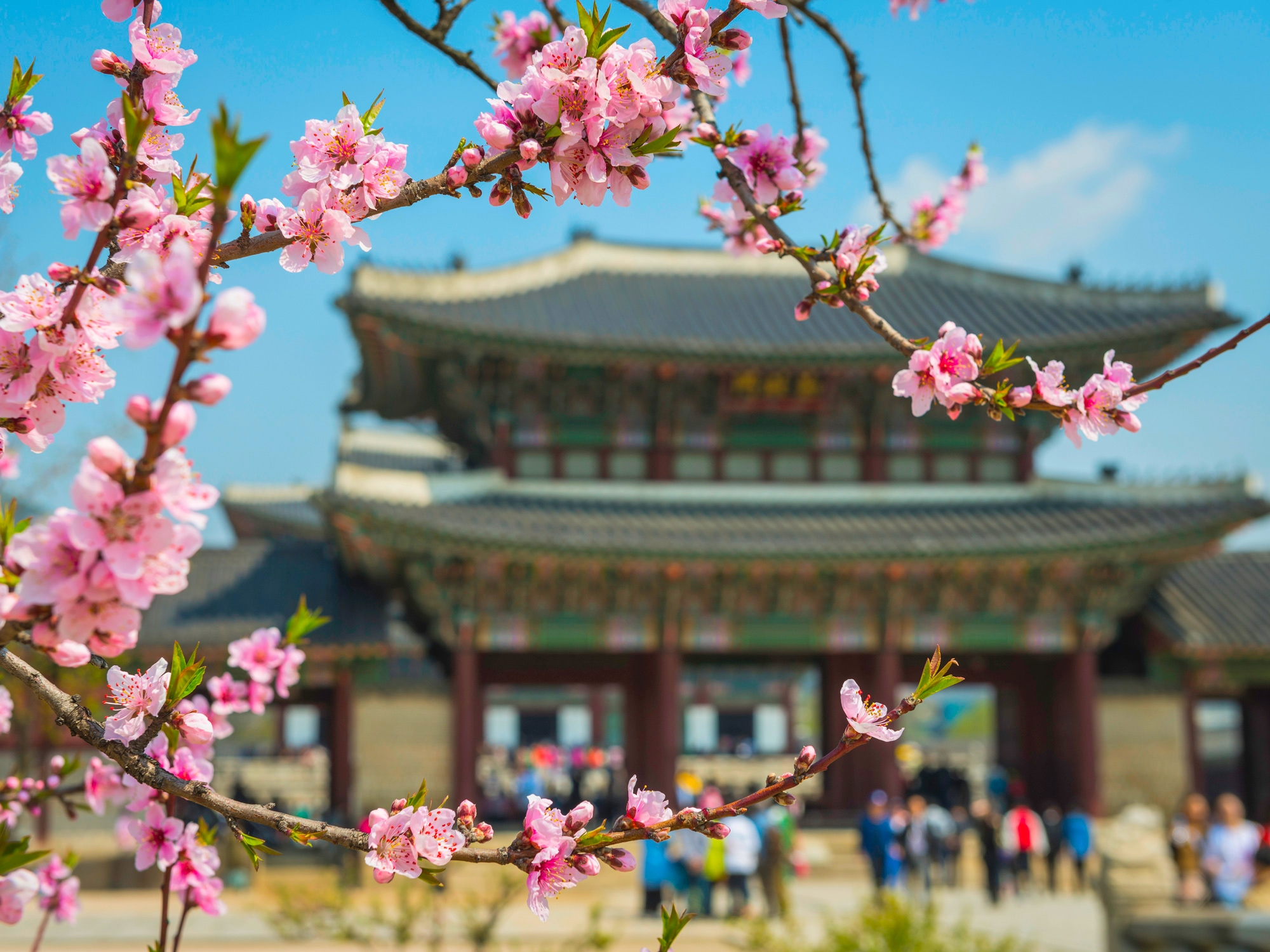 Premiers pas en Corée du Sud