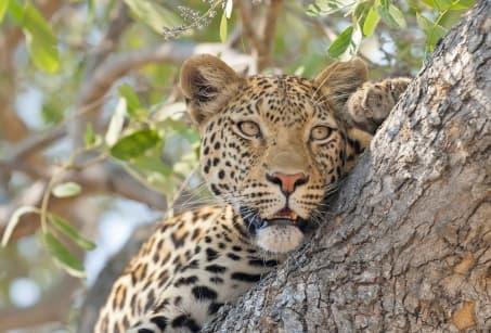 Botswana et Mozambique, luxe & nature