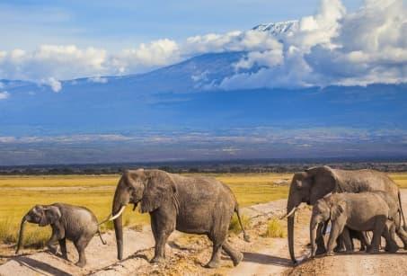 Aux confins des terres Masais