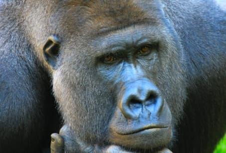 L'essentiel du Rwanda : volcans, gorilles & safari