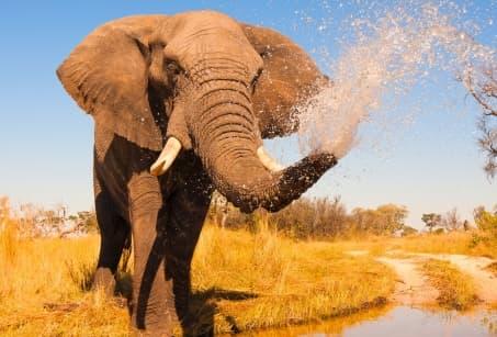 Sur les rives du Botswana : Okavango et Chobe