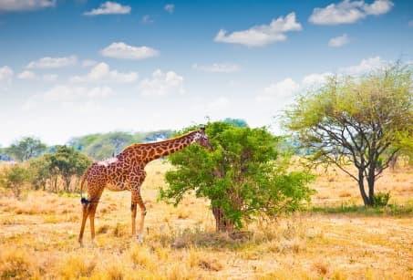 Tanzanie, au rythme de la brousse