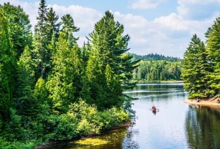 Ontario et Québec : Chutes du Niagara et Baleines du St Laurent