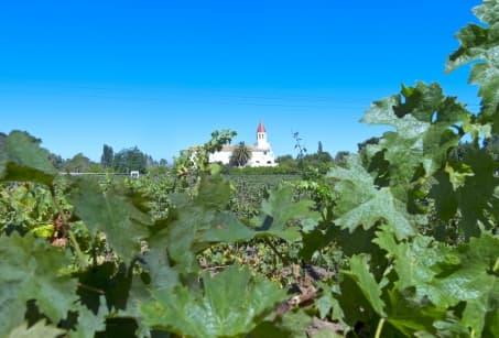 Les vignobles, véritable héritage chilien