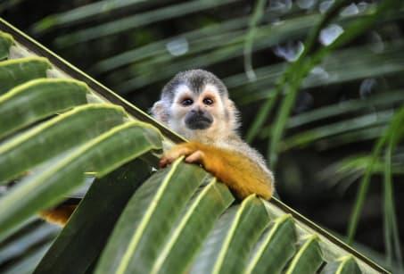 Premiers pas au Costa Rica