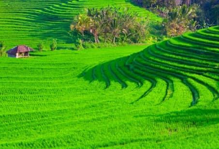 Bali, au cœur de l'île des dieux