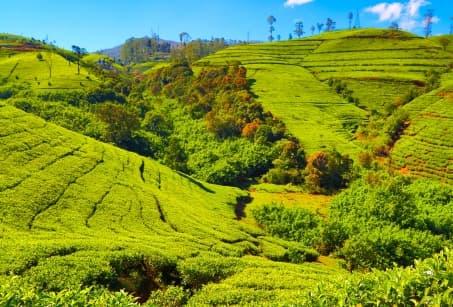 Le Sri Lanka, Grandeur Nature