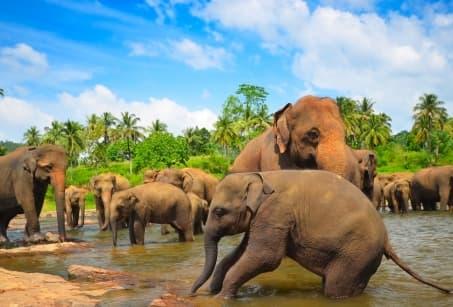 Dessine-moi un éléphant au Sri Lanka