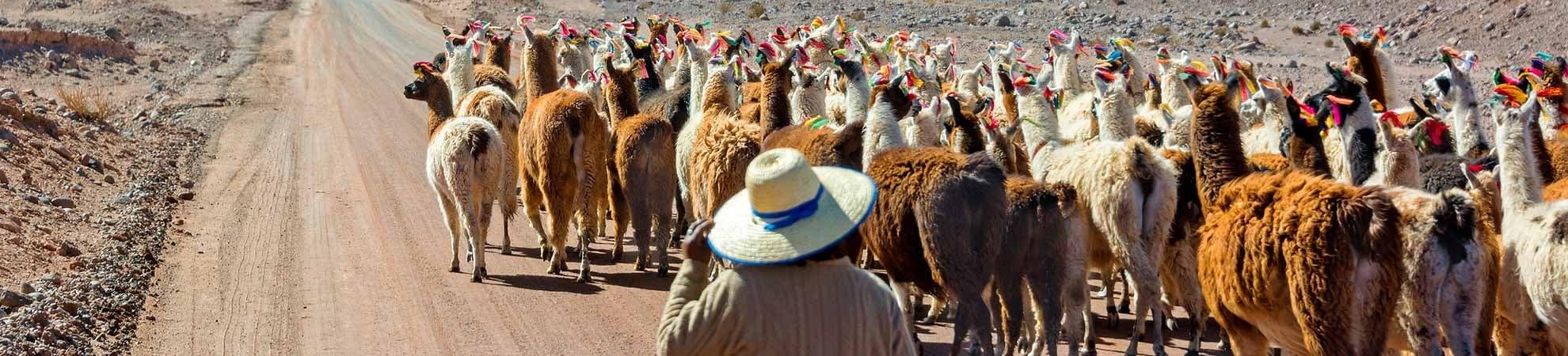 Toutes nos activités au Chili