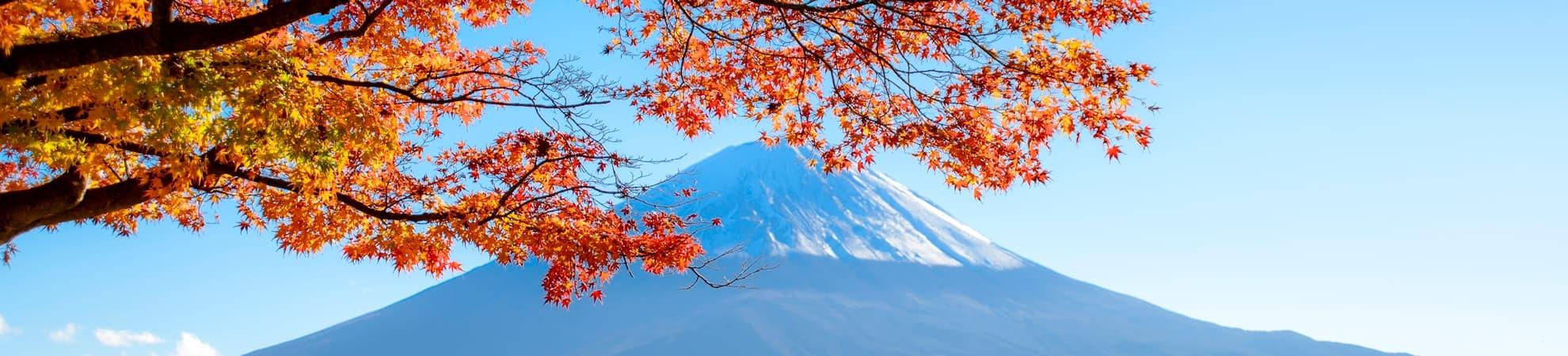 Voyager en groupe au Japon