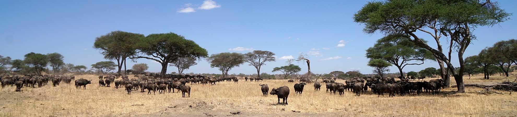 Séjour Tanzanie