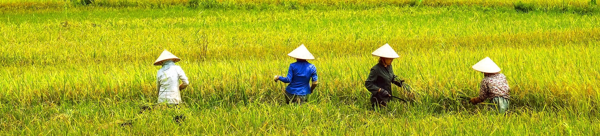 Voyager en groupe au Vietnam, Laos et Cambodge