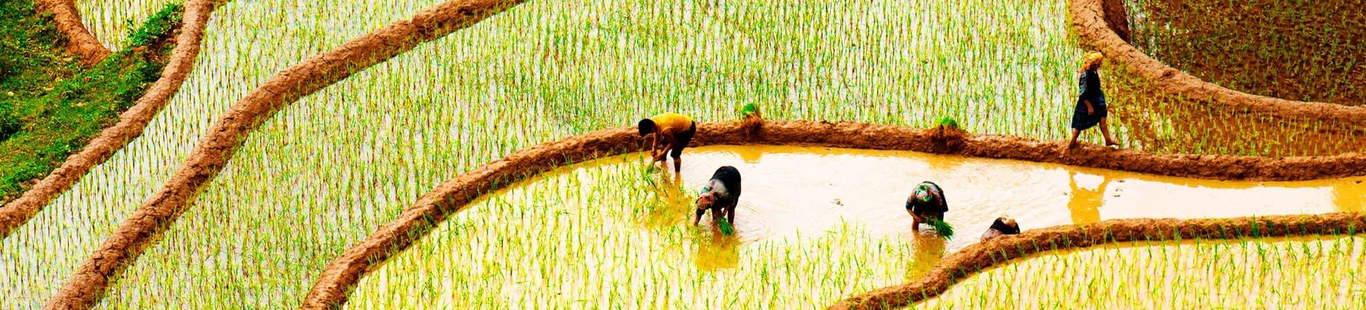 Fiche pays Vietnam