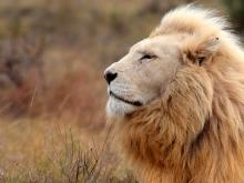 Afrique du Sud, merveilles du monde animal
