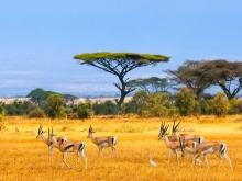 Safari Afrique du Sud & Swaziland