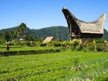 L'Indonésie, au fil des îles