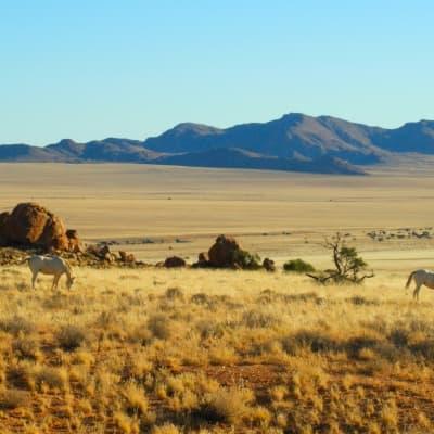 Balade à cheval dans le désert du Namib