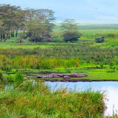 Deux activités par jour proposées par le Lodge (Delta de l'Okavango)