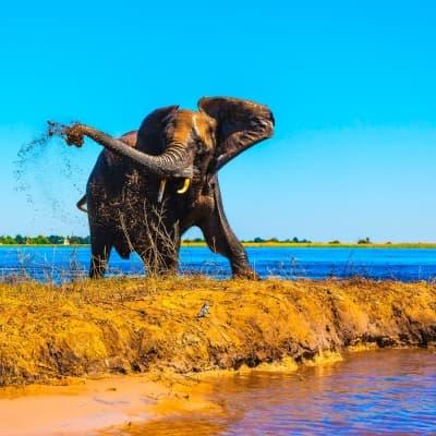 Les activités safari proposées par les lodges (Okavango et Chobe)