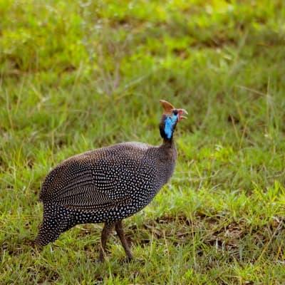 Observation des oiseaux au parc Udzungwa