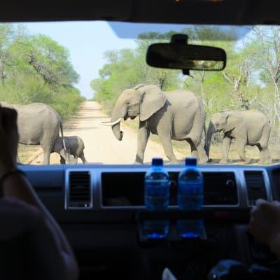 Un safari en 4x4 avec le Likweti Lodge & Sanctuary