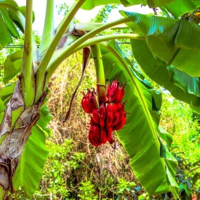 Visite du village de Mto Wa Mbu