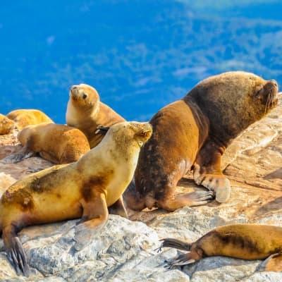 Plongée avec les lions de mer