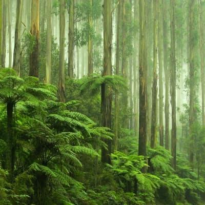 Aventure au cœur de la forêt tropicale
