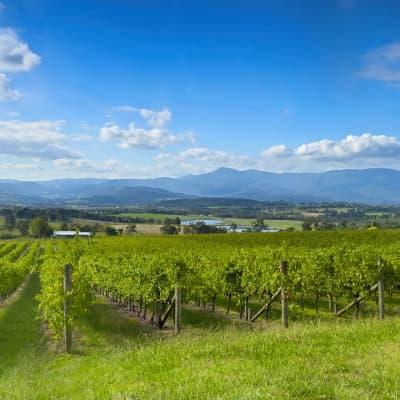 Les vins de la vallée de la Yarra