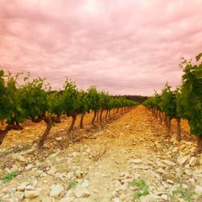 Route des vins dans la Barrossa Valley