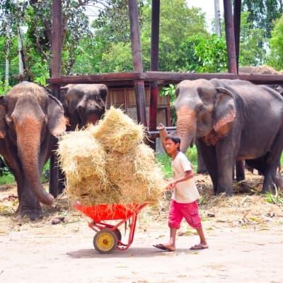 Visite d'un camp d'éléphants