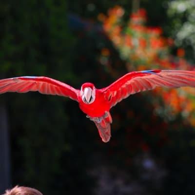 Parc des oiseaux Tropicana
