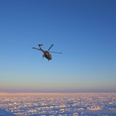 Excursion en hélicoptère sur la banquise et observation des Blanchons
