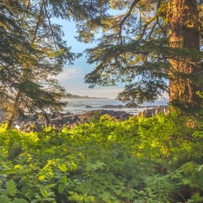 Parc National Pacific Rim