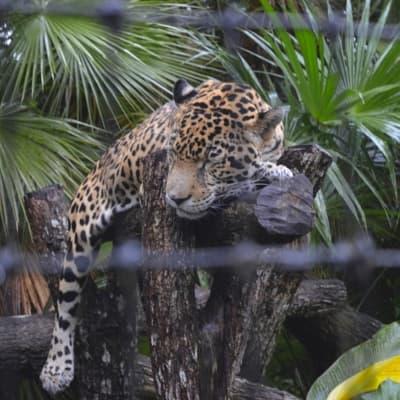 Zoo de Belize