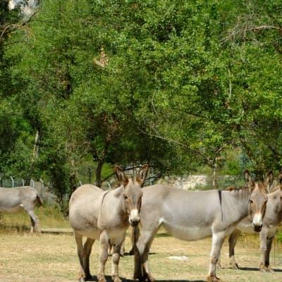 Balade à dos de mules