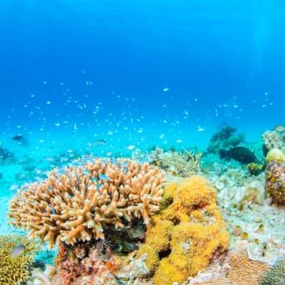 Journée snorkeling à Menjangan