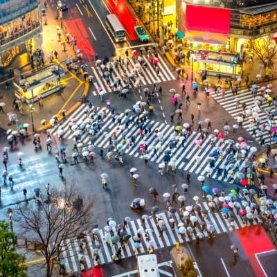 Quartier de Shinjuku et Shibuya