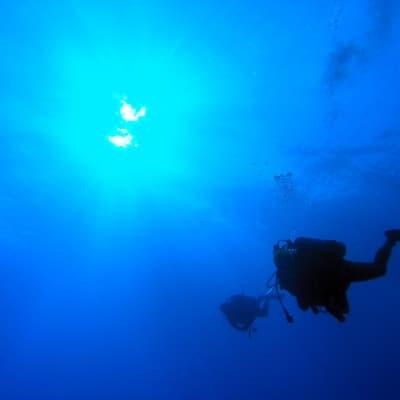 Observation sous-marine à la passe Tiuta en plongée libre