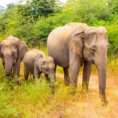 Visite de l'orphelinat des éléphants