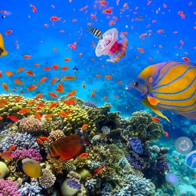 Aquarium de Monterey