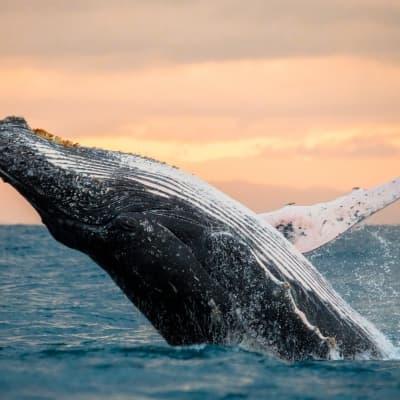Croisiere aux baleines